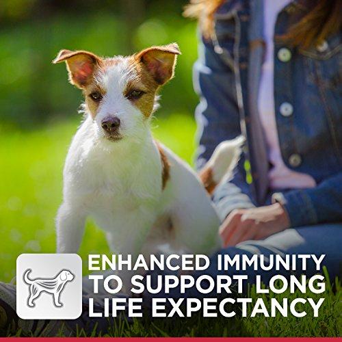 Harga Anjing murah terbaru Mei 2019